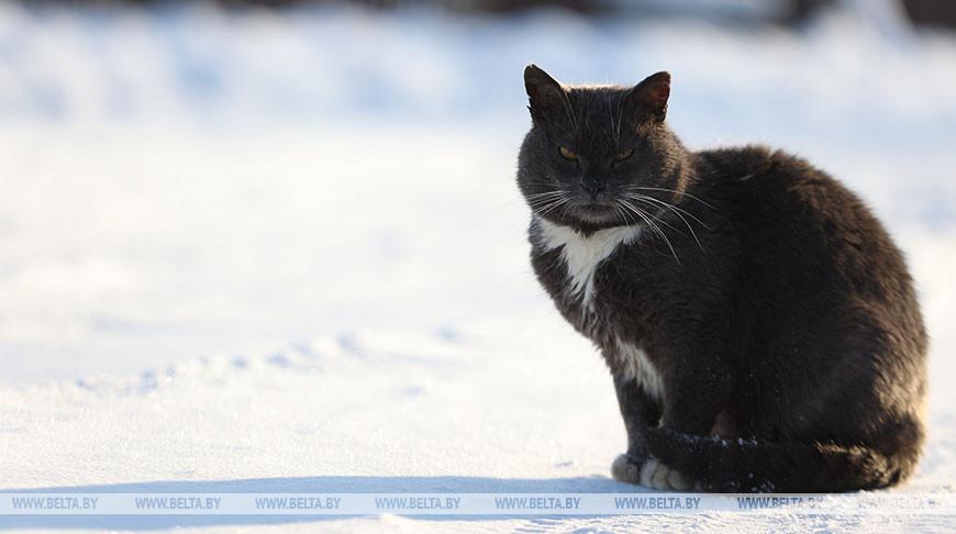 Зима в белорусской деревне