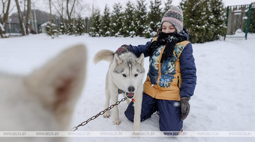 """В минском """"Динопарке"""" посетителей катают на собачьей упряжке"""