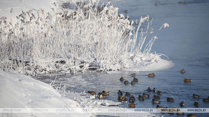 Температура воздуха в Гродненской области опустилась до минус 19 градусов