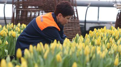 """Около 18 тыс. цветов готовит """"Могилевзеленстрой"""" к 8 Марта"""
