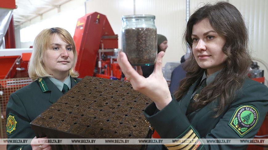 Линия по высеву семян лесных культур в кассеты заработает в Могилевском лесхозе