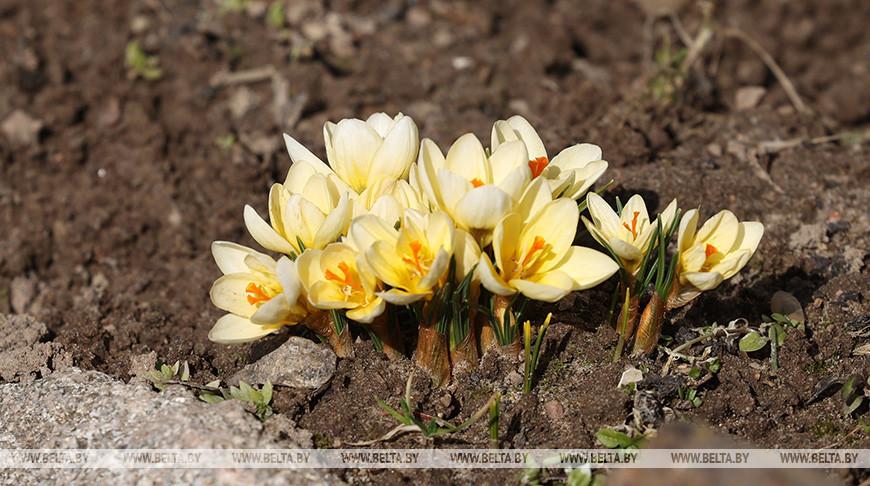 Настоящая весна пришла в Могилев