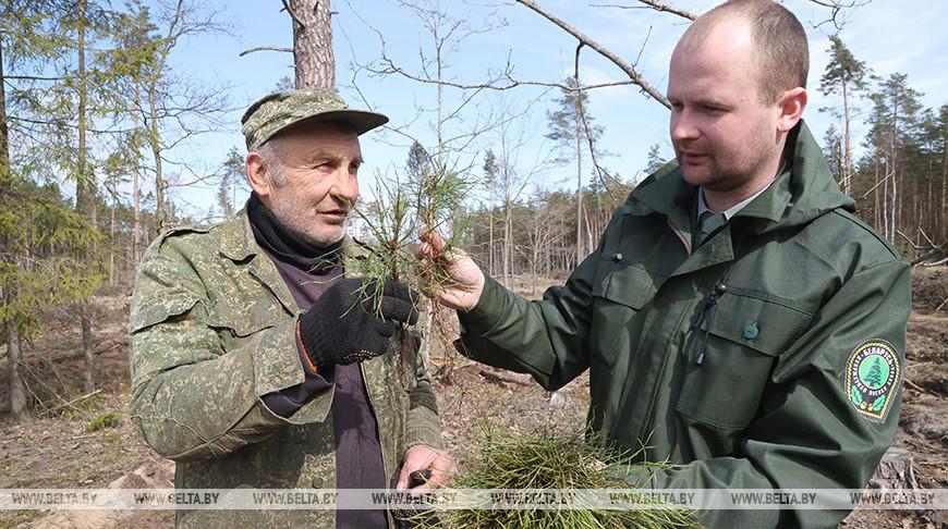 Деревья на площади 30 га планируют посадить в Вильчицком лесничестве во время Недели леса