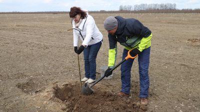 Плантация грецкого ореха появилась в Кировском районе