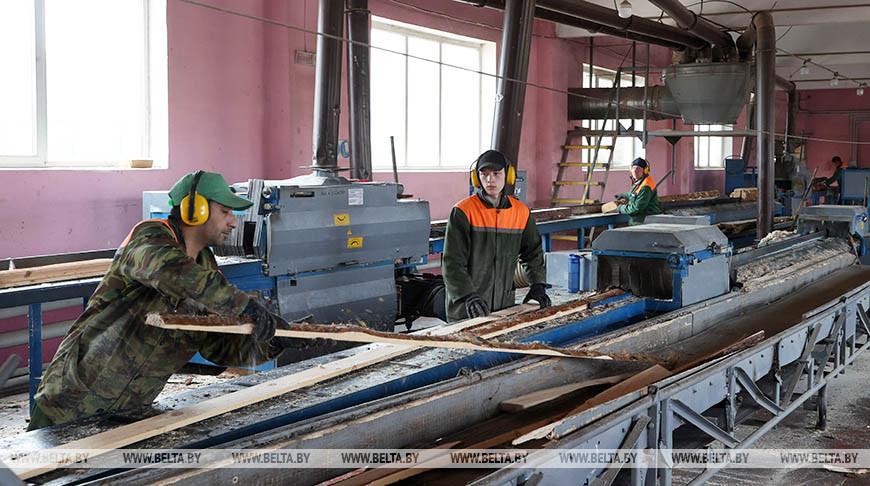Новые сушильные камеры установят в Кличевском лесхозе