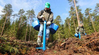 Вице-премьеры приняли участие в посадке леса в Узденском лесхозе