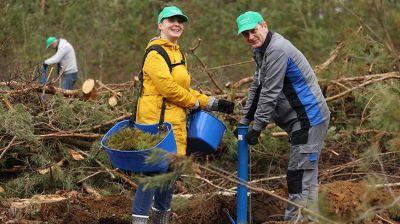 Сотрудники Администрации Президента во время субботника садили лес в Логойском лесхозе