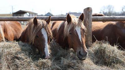 В Полесском радиационно-экологическом заповеднике развиваются коневодство и пчеловодство