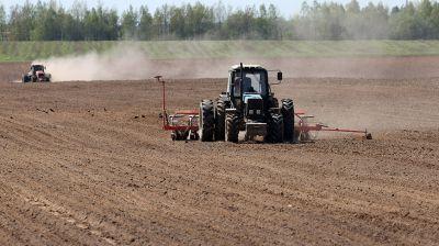 Посадка кукурузы идет в Могилевском районе