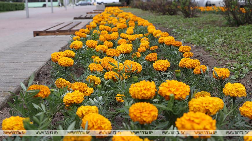 """Более миллиона цветов высадит на улицах города """"Могилевзеленстрой"""""""