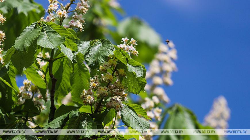 Теплая и дождливая погода ожидается в Беларуси 24 мая