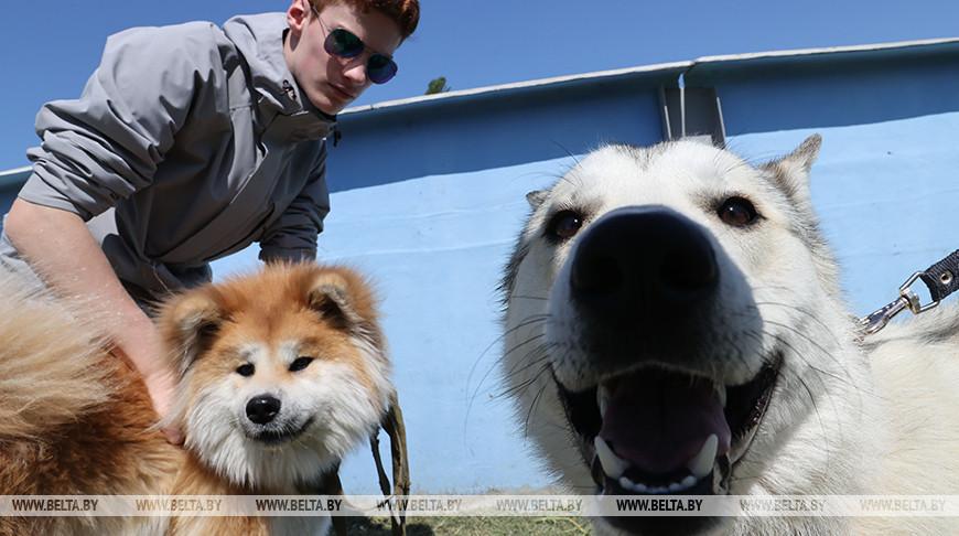 Областная выставка охотничьих собак в Гомеле