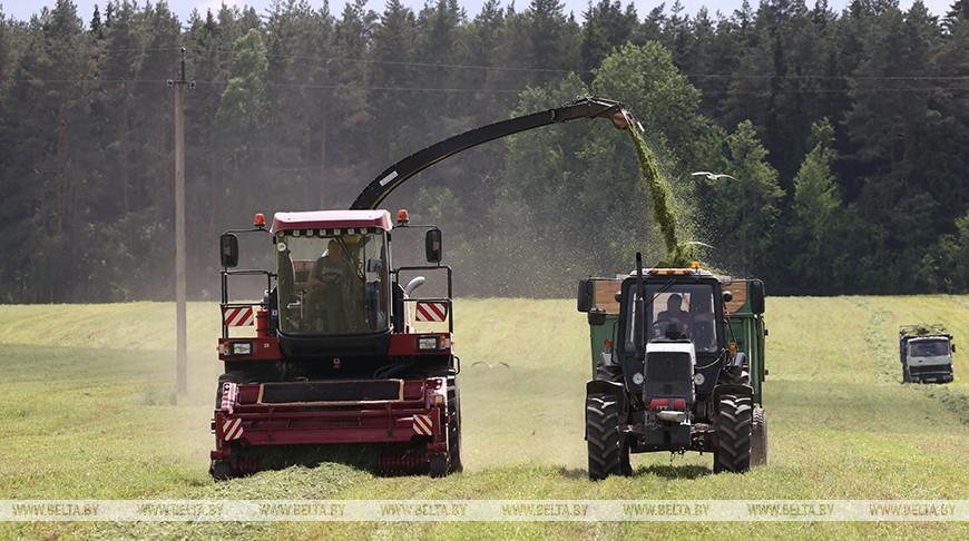 Заготовка кормов идет в Могилевском районе