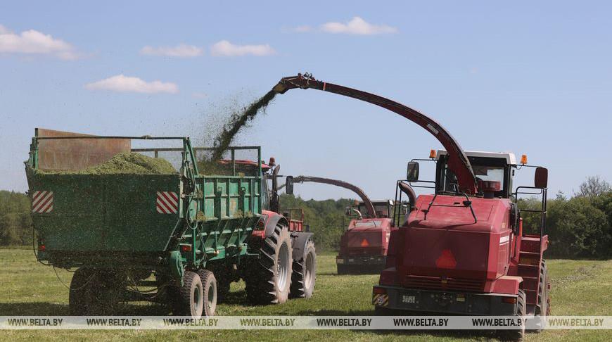 Все районы Витебской области приступили к заготовке кормов