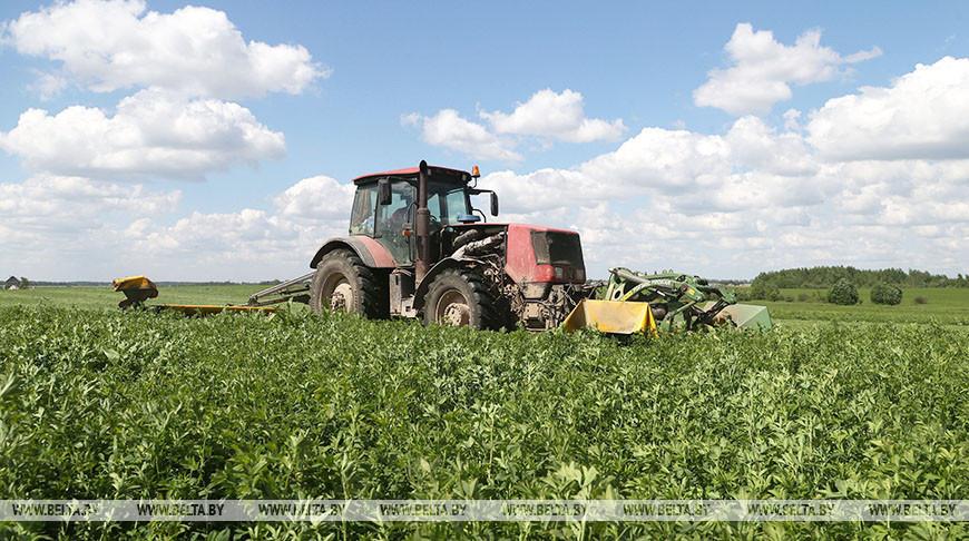 В хозяйствах Могилевского района заготавливают корма
