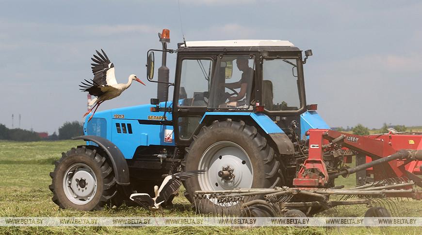 Заготовка кормов идет в Витебском районе