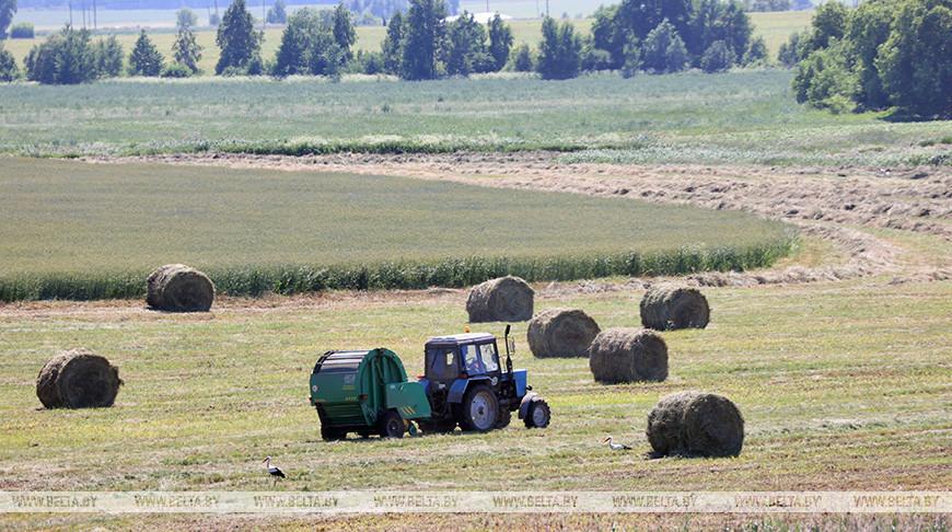 Сельхозпредприятия Жлобинского района ведут заготовку кормов