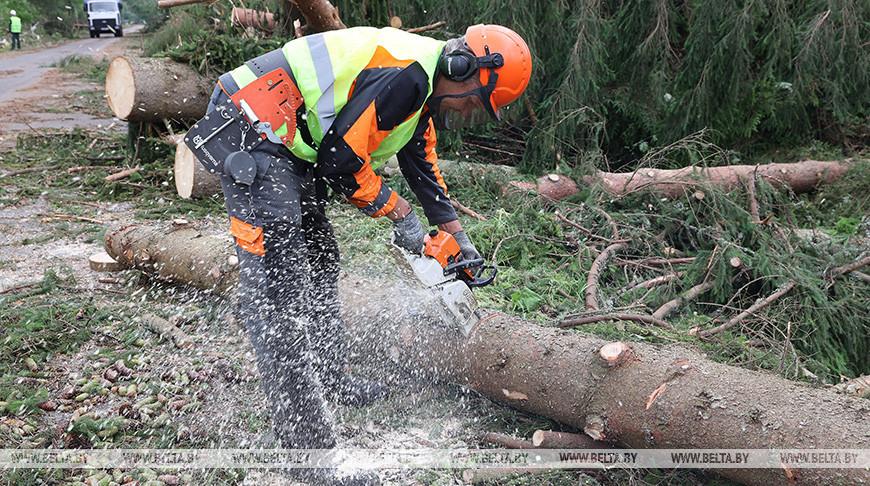 В Шумилинском лесхозе ликвидируют последствия урагана