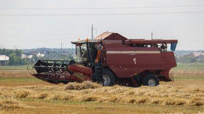 Уборку озимого ячменя ведут в Брестской области