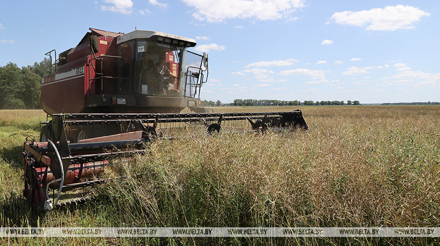 """Механизаторы ОАО """"Неначское"""" первыми в районе приступили к уборке рапса"""