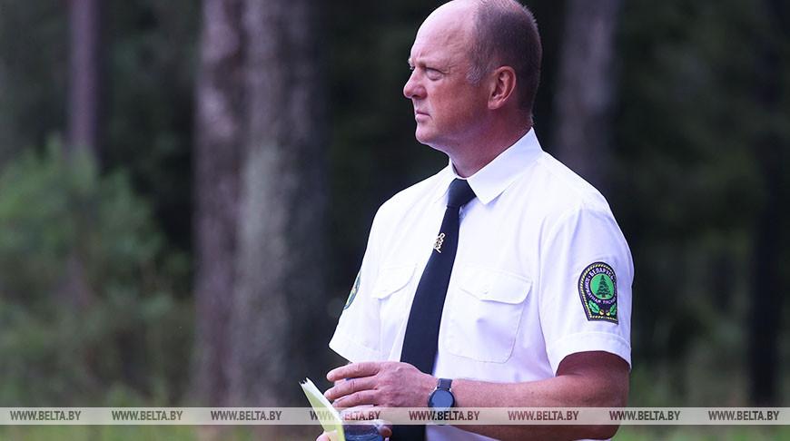 Минлесхоз рассказал, как проводится лесоустройство и определяются объемы рубок