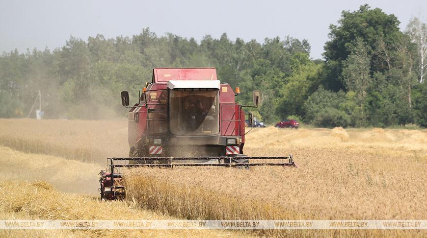Уборка зерновых идет в Гомельской области