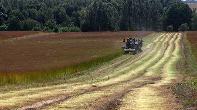 В Шкловском районе убирают лен