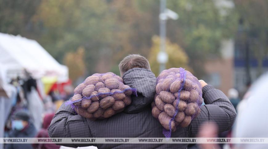Осенние ярмарки проходят в Минске