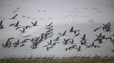 Журавли летят на юг