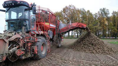 Уборка сахарной свеклы идет в Могилевской области