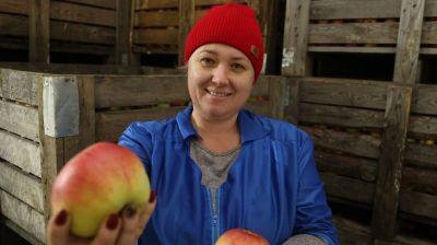 В Могилевской области формируют стабфонд плодоовощной продукции