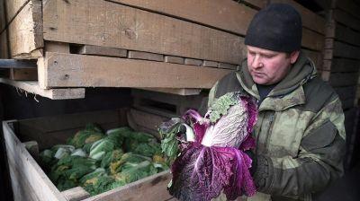 В Могилевской области идет формирование стабфонда плодоовощной продукции