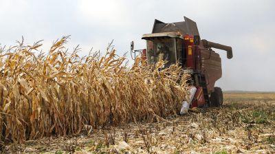 Осенние полевые работы идут в Малоритском районе