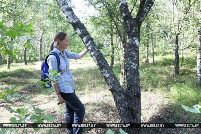 Международный форум молодых ученых-лесоводов проходит в Гомеле