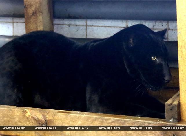 Друг Маугли поселился в Гродненском зоопарке