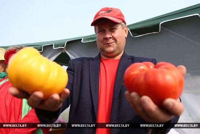 Ивье стал помидорной столицей Беларуси