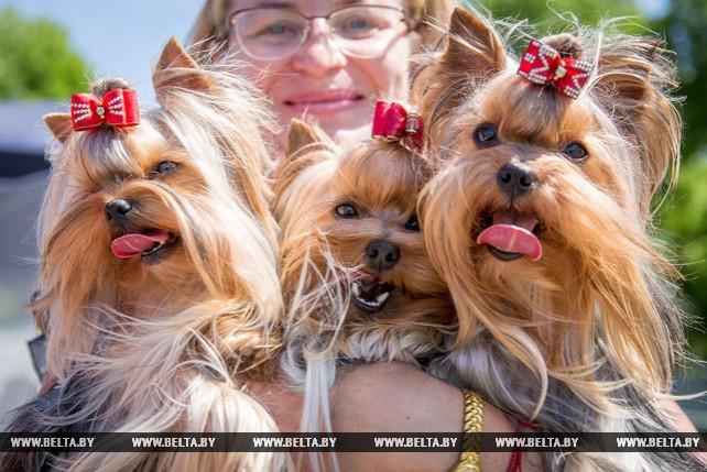 Республиканская выставка пород собак прошла в Бресте