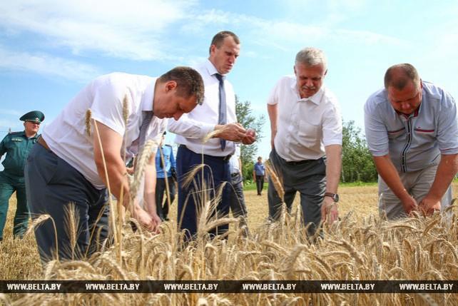 Зась о контроле уборочной правоохранителями: кампания в Беларуси проходит организованно
