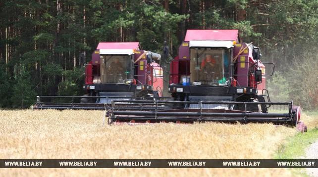 В Гродненской области приступили к уборке зерновых