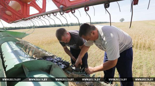 В Смолевичском районе идет уборка зерновых