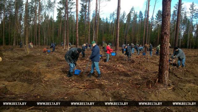 Сотрудники КГК работали на посадке леса и благоустройстве территорий