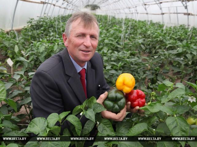 Доцент БГСХА Михаил Добродькин более 10 лет занимается селекцией белорусских томатов