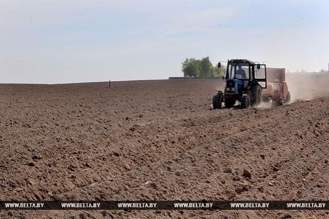 В Могилевской области идет посадка картофеля