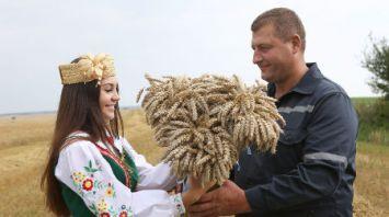 Комбайнер СПК им. Деньщикова первым в Гродненской области намолотил более 3 тыс. т зерна