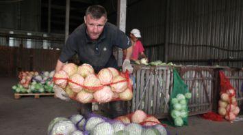 Служба занятости помогает сельхозпредприятиям Могилевской области в уборке урожая
