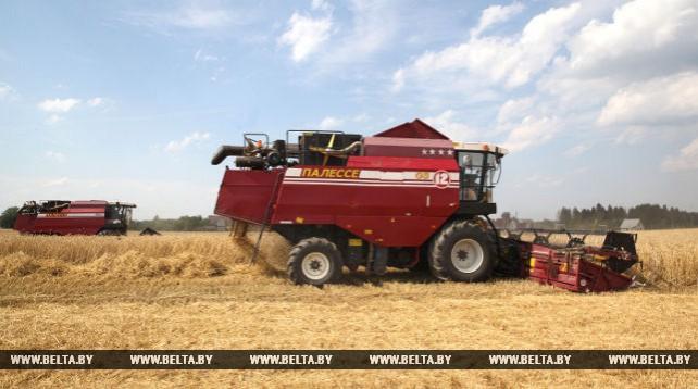 Массовая уборка зерновых началась в Могилевской области