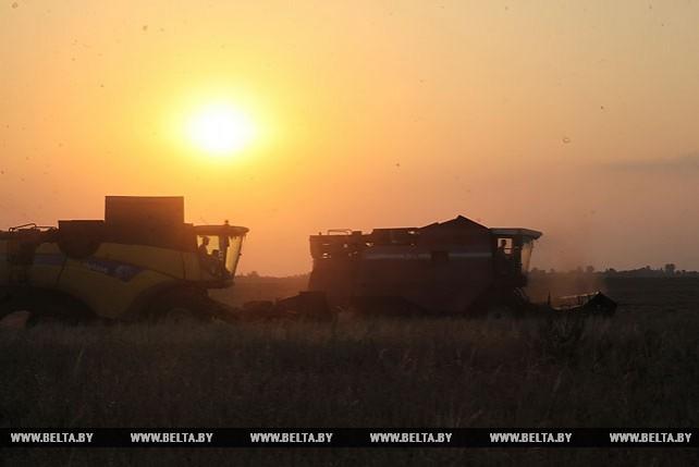 До позднего вечера трудятся хлеборобы на уборке зерновых в Гомельском районе