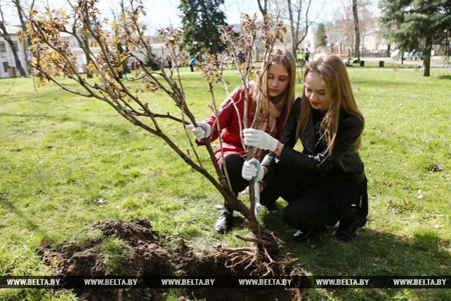 Ботанический сад XVIII века воссоздают в Гродно