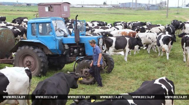 """Пастбищное содержание коров в ОАО """"Неначское"""" позволяет увеличить надои"""