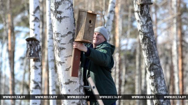 В Мозырском опытном лесхозе встречают перелетных птиц с почти 600 скворечниками